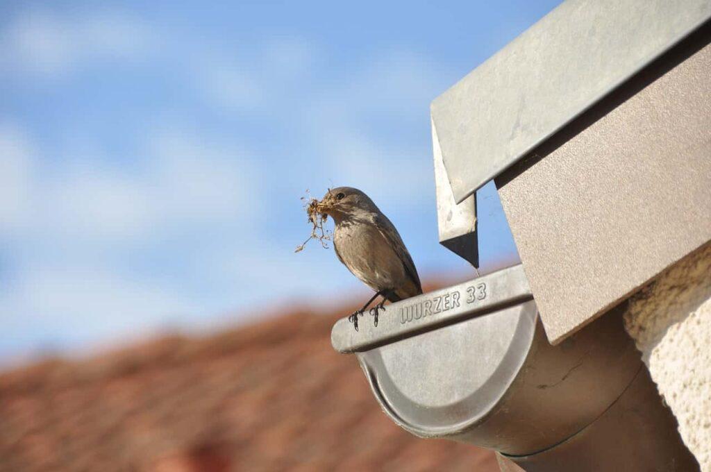 Bird nest on Gutter
